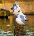 Birds In A Line