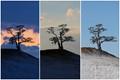 Magic tree of Baikal