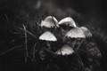 The Mushroom Dance