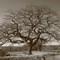 Moreton Oak 10 x 7