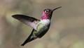 my sweet little hummingbird