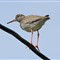 Norway_bird3