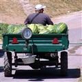 Mobile Melon Sale