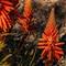 Ornimental-Aloe-Plant-Web