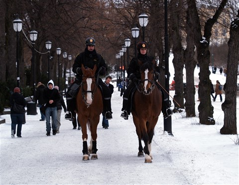 Horse Patrol, Downtown Oslo