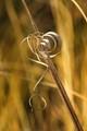 Grass curls
