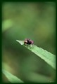 The Fly .....!