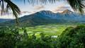 Taro Fields - Kauai, Hawaii-7404