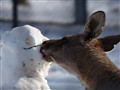 Wallaby kissing Snowman -  P1100109