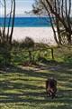 Quintissential Australia