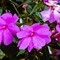 Flowers_2014-15-2Z