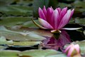 Flower & water 2