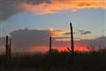 Sonora Desert Monsoon Storm