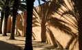 Palm Shadows 2