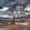 Lake Wanaka tree