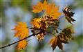 Leaves_3581