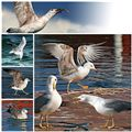 My Seagulls