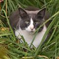 Cat in Green Grass