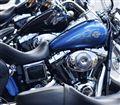 100 Harley Horses